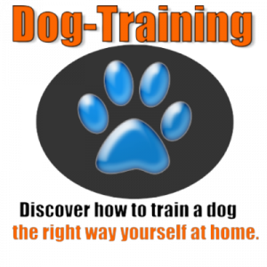 Dog Canine Training