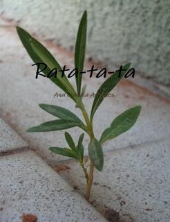 Rata-ta-ta