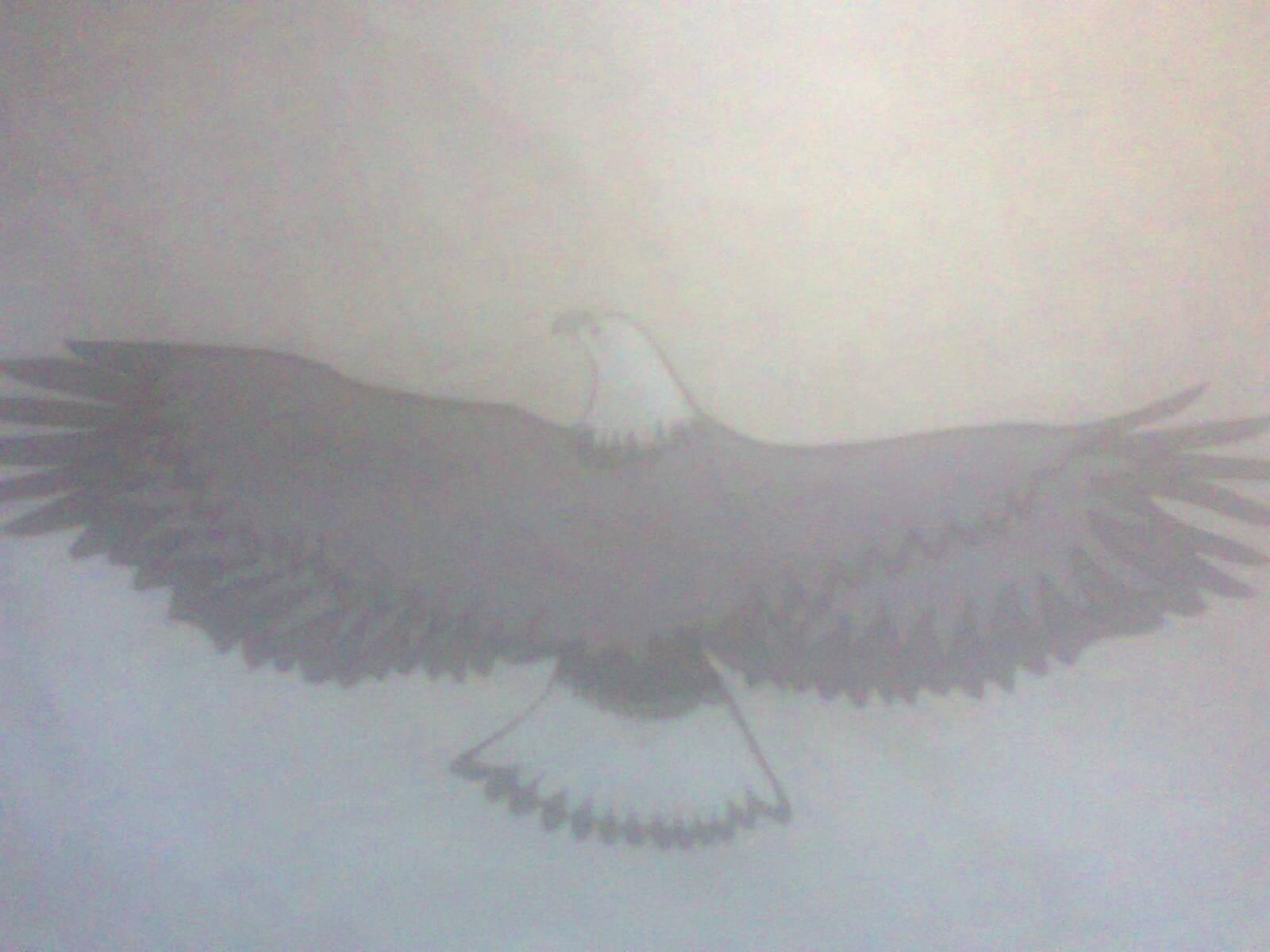 A peom: An Eagle
