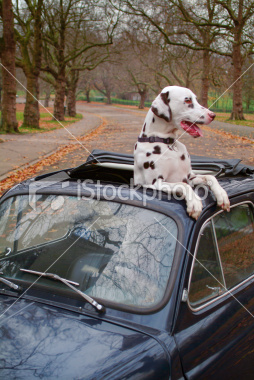 Dogs Chase Cars